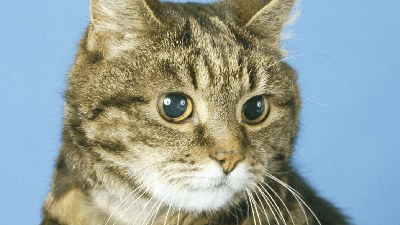 Living with a blind cat fact sheet